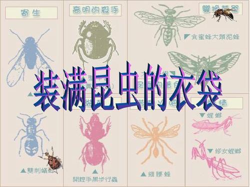 装满昆虫的衣袋教案 人教版