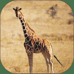 动物世界全集高清版 v6.2.2 安卓版