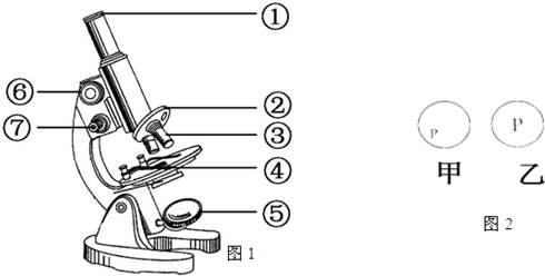 显微镜的结构图示意图