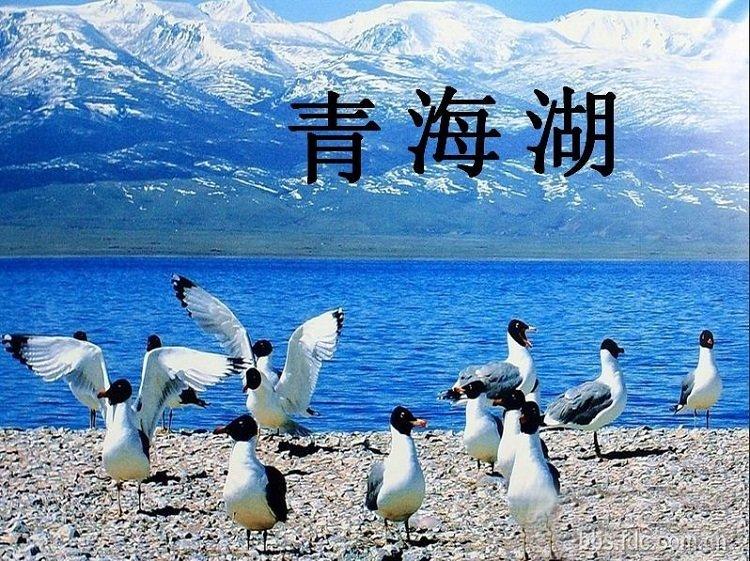 青海湖简介ppt