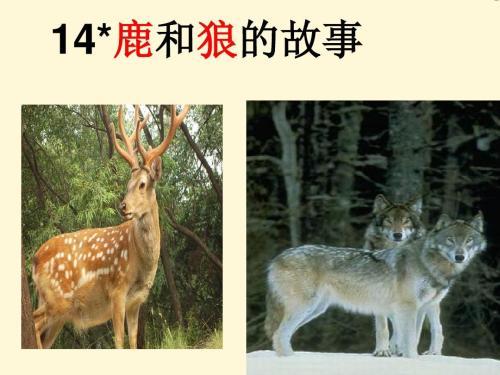 鹿和狼的故事ppt课件免费
