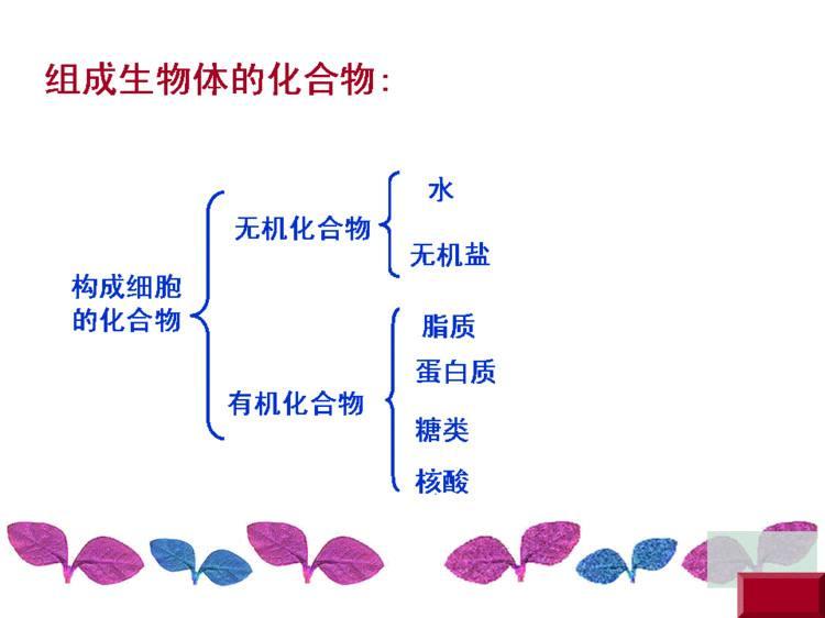 细胞中的元素和化合物ppt幻灯片