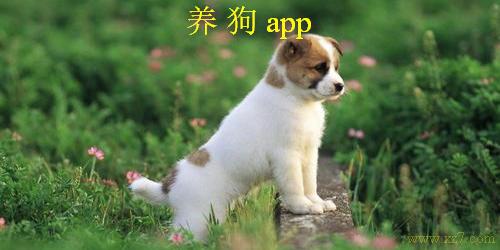养狗app