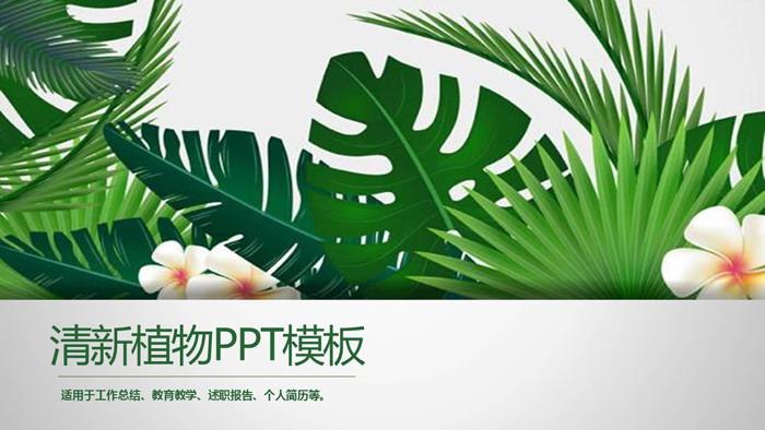 绿色植物ppt背景模板 电脑版