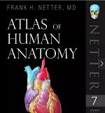 奈特解剖图谱电子版