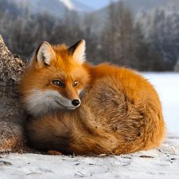 野生狐狸模拟器3d游戏v1.0.2 安卓版
