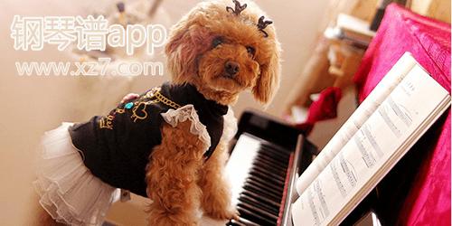 钢琴谱app软件哪个好?好用的钢琴谱app推荐-钢琴谱手机软件下载